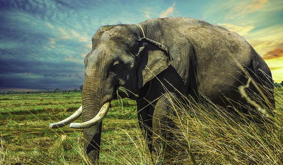 Слон Фэн-Шуй