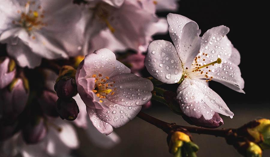 Растения и цветы для Фэн-Шуй