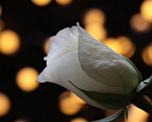 Любовь в Хиромантии