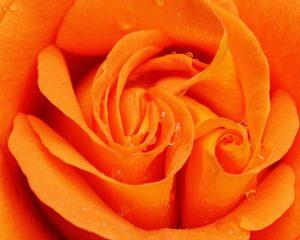 Эффекты оранжевого цвета по Фэн-Шуй