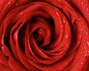 Эффекты красного цвета по Фэн-Шуй