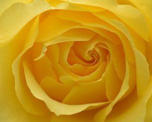 Эффекты желтого цвета по Фэн-Шуй