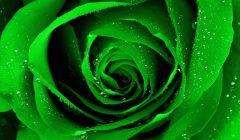 Эффекты зеленого цвета по Фэн-Шуй