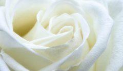 Эффекты белого цвета по Фэн-Шуй
