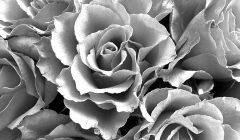 Эффекты серого цвета по Фэн-Шуй