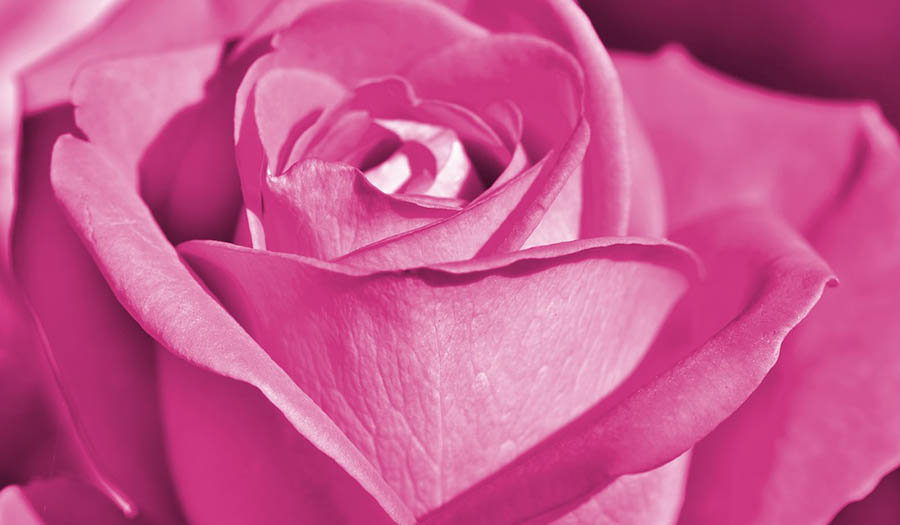 Эффекты розового цвета по Фэн-Шуй