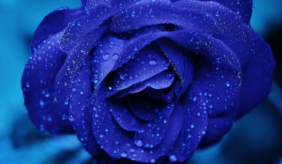 Эффекты синего цвета по Фэн-Шуй