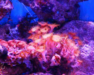 Пасьянс Золотая рыбка на желание