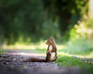 Гадание на желание на орешках